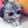 咪贝萌 MYJ23 宠物眼镜 6.9元包邮(需用券)