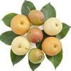 晋州长城 皇冠·丰水·翡翠酥梨 三色组合装6个 净重约1.7kg 9.9元