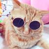 咪贝萌 MYJ23 宠物眼镜 6.9元(需用券)