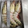 海拉戈 缅甸大虎虾 1kg 3只装  468元包邮(一只最低6两)
