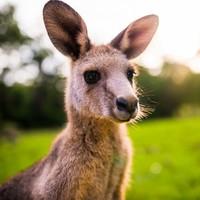 跨元旦!全国多地-澳大利亚悉尼/墨尔本/奥克兰