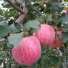 【汉购网】庄浪红富士苹果 24枚装约7斤 单果70mm 31元包邮