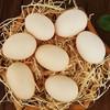 森林家园 新鲜土鸡蛋 20枚 19.9元包邮(需用券)