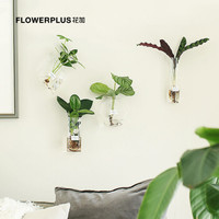 FlowerPlus 花加 水雾森林盆栽 4株