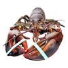 Gfresh 活鲜加拿大龙虾 550g-650g 1只 149元