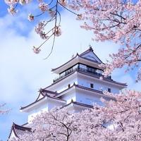 春天来了,樱花开了,万物复苏,又到了住酒店的季节~