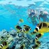 马来西亚沙巴  亚庇环滩岛一日游(浮潜/深潜/下午茶/SPA套餐可选) 475元起/人