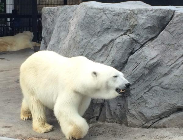世界三大动物园 日本北海道旭川/毛里求斯卡塞拉Safari/新加坡日+夜间动物园门票