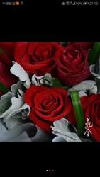 花之舍 七夕情人节精美玫瑰花束 两种规格可选 京津冀顺丰配送 一生一世(11朵)