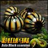 马来西亚彩虹球马陆 另类宠物 球马陆活体 爬虫活体虫 408元