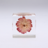 sola cube 麦藁菊植物标本立方体 225元包邮(需用码)