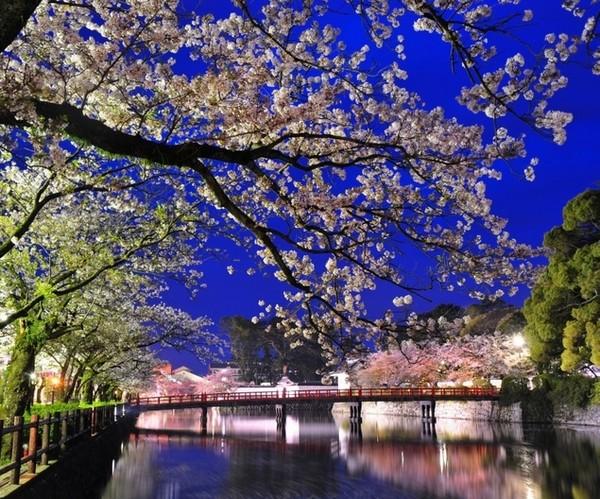 懒人必备!日本冷门地赏樱攻略,人少樱美,住宿推荐--本州篇