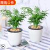 景润赉 水培盆栽  19.9元