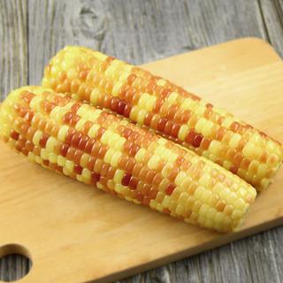 都乐非转基因彩糯玉米棒6根 真空包装蔬菜单根约200g