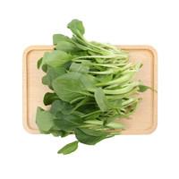 小汤山 油菜苗 200g