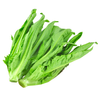 绿农说 油麦菜   300g