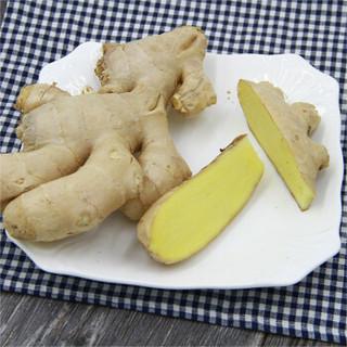 绿鲜知 生姜 约500g 新鲜蔬菜