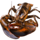 wecook 味库 鲜活波士顿龙虾 (450-550g) 1只