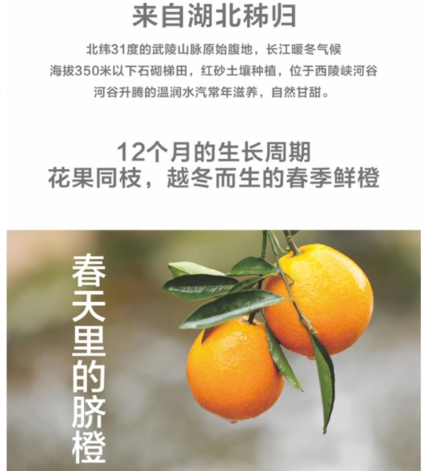 国家宝藏X淘乡甜 秭归云雾橙定制礼盒 5斤装