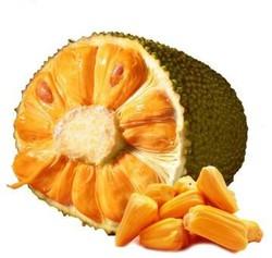 六井 海南菠萝蜜 10斤