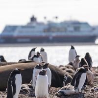 飞猪最后一年包船!错过不再有!2020南极之旅 午夜阳光号13天邮轮游