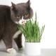 pidan 彼诞 宠物猫草 自种植套装