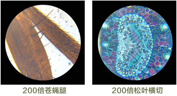 BRESSER 宝视德 88-55008 显微镜 40-1600倍