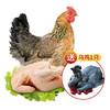 芮瑞 老母鸡1只 乌鸡1只 118元