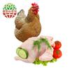 农家果园散养老母鸡 净重1100g *2件 108元(合54元/件)