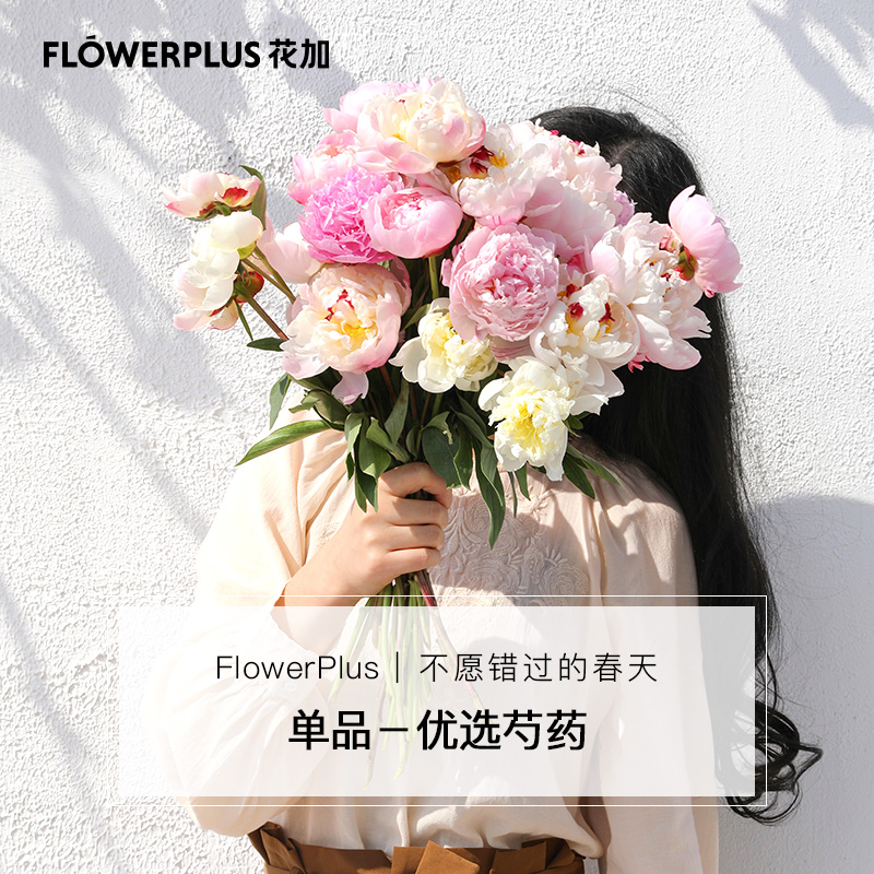 FlowerPlus 花加 芍药/睡莲/玫瑰 鲜花速递 10枝
