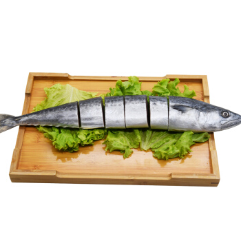 盖世 冷冻渤海鲅鱼 马鲛鱼 500g 整条  *10件
