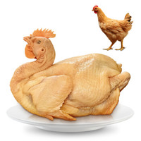 温氏 供港矮脚黄鸡 800g 高品质供港鸡 农家散养土鸡 散养母鸡 土鸡走地鸡 散养130天以上