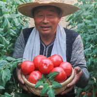 普罗旺斯 西红柿新鲜水果 5斤