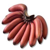 帆儿庄园 福建漳州红皮香蕉  2.5kg