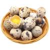 新鲜生鹌鹑蛋 105枚 29.6元