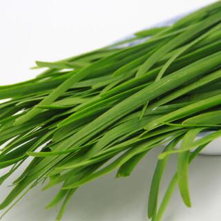 绿鲜知 韭菜 约400g 烧烤食材 新鲜蔬菜