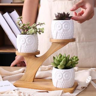 奥美优 花盆陶瓷 3个装 创意多肉花盆组合套装 肉肉植物花盆(含木托)LZ2930