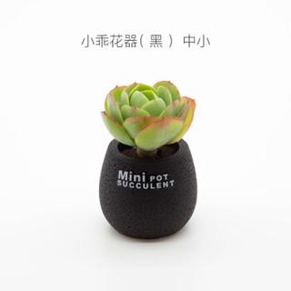 艾植悟 小乖  碧桃单头 碧桃多肉植物 白色花器 (组合、4-6cm)
