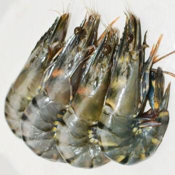 猫二郎 越南黑虎虾 20尾盒装 约1kg(净重650g)