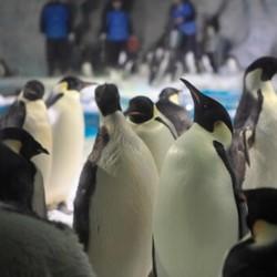 珠海长隆企鹅酒店 极地房1晚+2张海洋王国2日票+双人自助晚餐