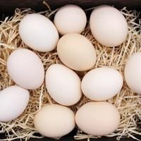 富润世  鲜鸡蛋黄河滩养殖鸡蛋  40枚