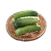 莱阳梨 新鲜水果黄瓜 5斤