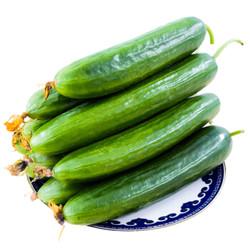 芬果时光 新鲜水果小黄瓜 5斤装