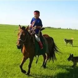 沙漠徒步,篝火狂欢!北京-乌兰布统+皇家草原+怀柔+玉龙沙湖夏令营6天5晚亲子游