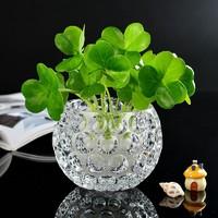 宝兰晶 玻璃水培花瓶 7.5*10cm 不含植物
