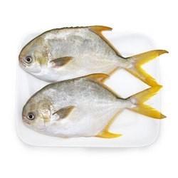 翔泰 金鲳鱼  700g(2条)*4件+赠罗非鱼700g(2条)*2件