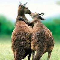 暑假末!海南航空 长沙直飞澳大利亚墨尔本