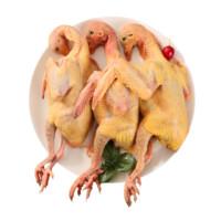 芮瑞 农家散养新鲜鸽子 3只装 杀前约1300g