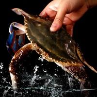 东半山 舟山海鲜 5-9两/只 特大野生梭子蟹 4-6只 1.5kg