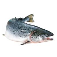 大渔场 智利三文鱼整条 1000g *3件